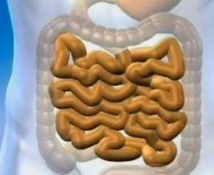 Как вылечить кишечник
