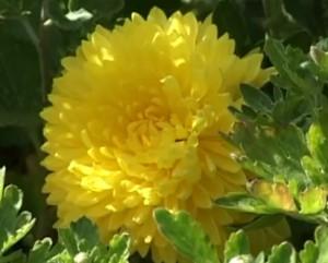 Какие домашние цветы любят тень
