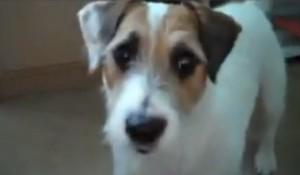 Как избавить собаку от блох