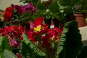 фото: 2013 11 27 100051 300x200 - Как сохранить цветы во время отпуска - kak