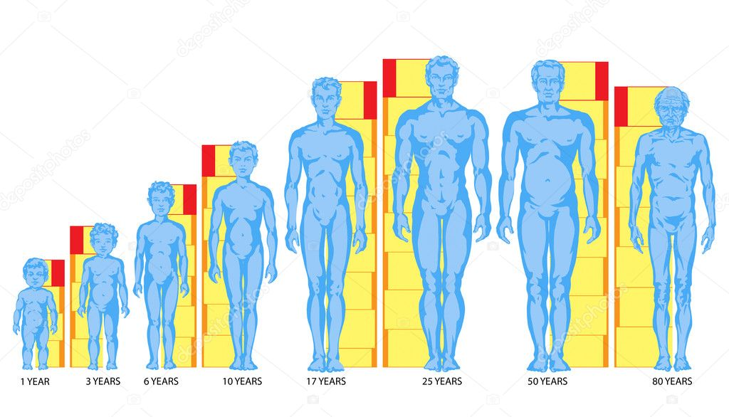 depositphotos_24112679-stock-photo-increasing-male-body-shapes-proportions.jpg